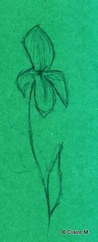 Claire dessin 5 fleur